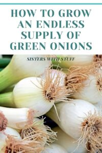 How you can have endless green onions at your fingertips!